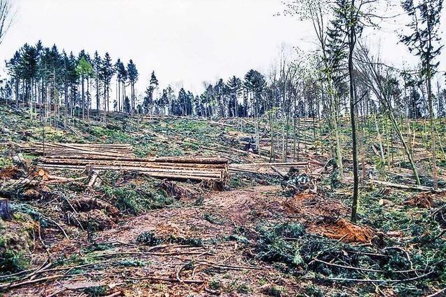 So hat sich der Friesenheimer Wald nach Orkan Lothar erholt