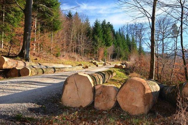 Geringere Ernte wegen schlechter Preise im Bollschweiler Wald