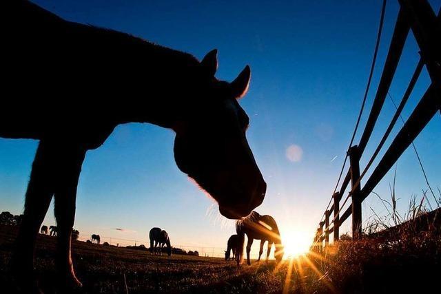 Pferde heilen verletzte Seelen: So wirkt Reittherapie