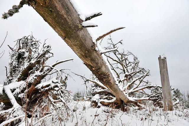 1999 wütete nicht nur Sturm Lothar im Kleinen Wiesental