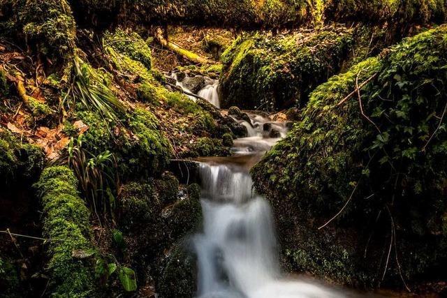 Die Heißbachschlucht im Kleinen Wiesental ist ein idealer Ort zum Waldbaden