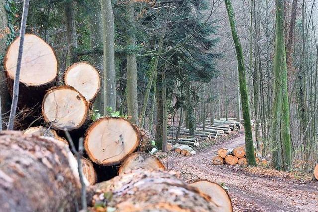 Auggen erzielt mit Wald höheren Gewinn