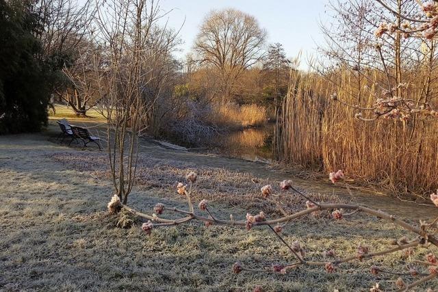 Morgendliche Eiszeit