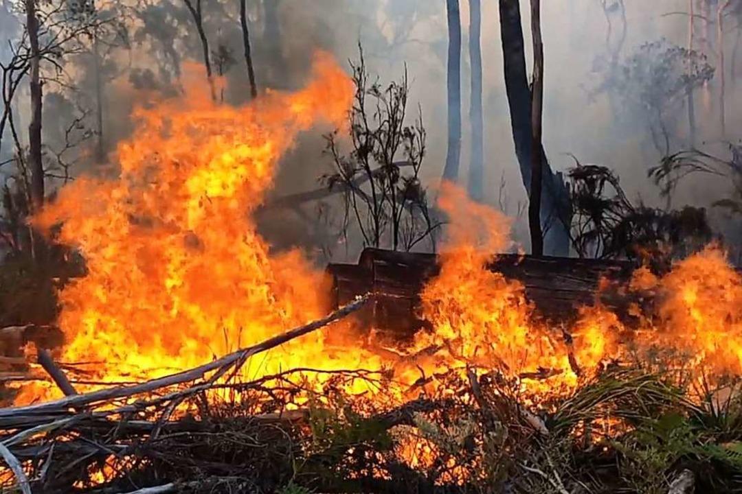 Landesweit wurden mehr als 1400 Häuser zerstört.  | Foto: Tasmania Fire Service (dpa)