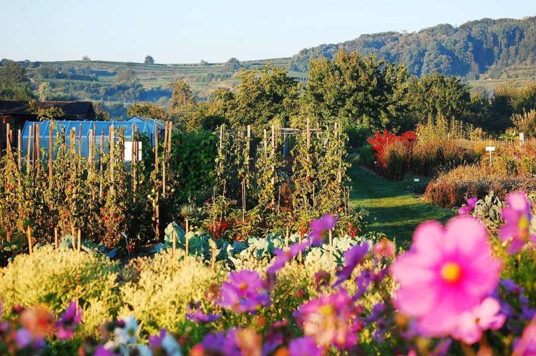 Besondere Gärten locken überall in der Region.  | Foto: SWR/Promo