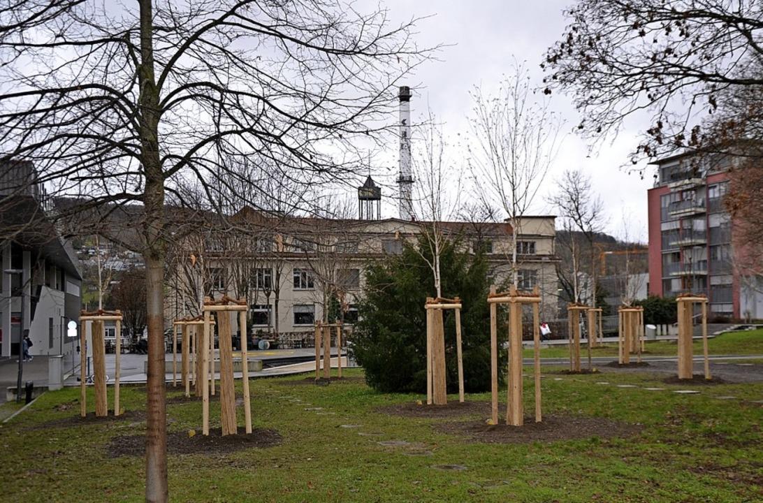 Auf dem Meeraner Platz wurden schattenspendende Bäume gepflanzt  | Foto: Stadt Lörrach