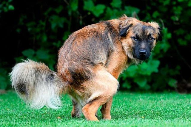 Die meisten Hundehalter im nördlichen Breisgau nutzen Kotbeutel – aber nicht alle