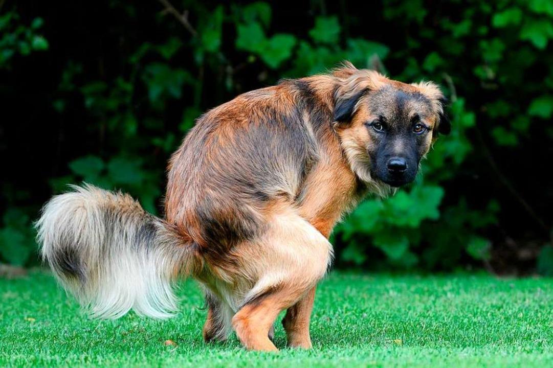 Die meisten Hundehalter im nördlichen ...einden – aber längst nicht alle.    Foto: Carola Schubbel  (stock.adobe.com)