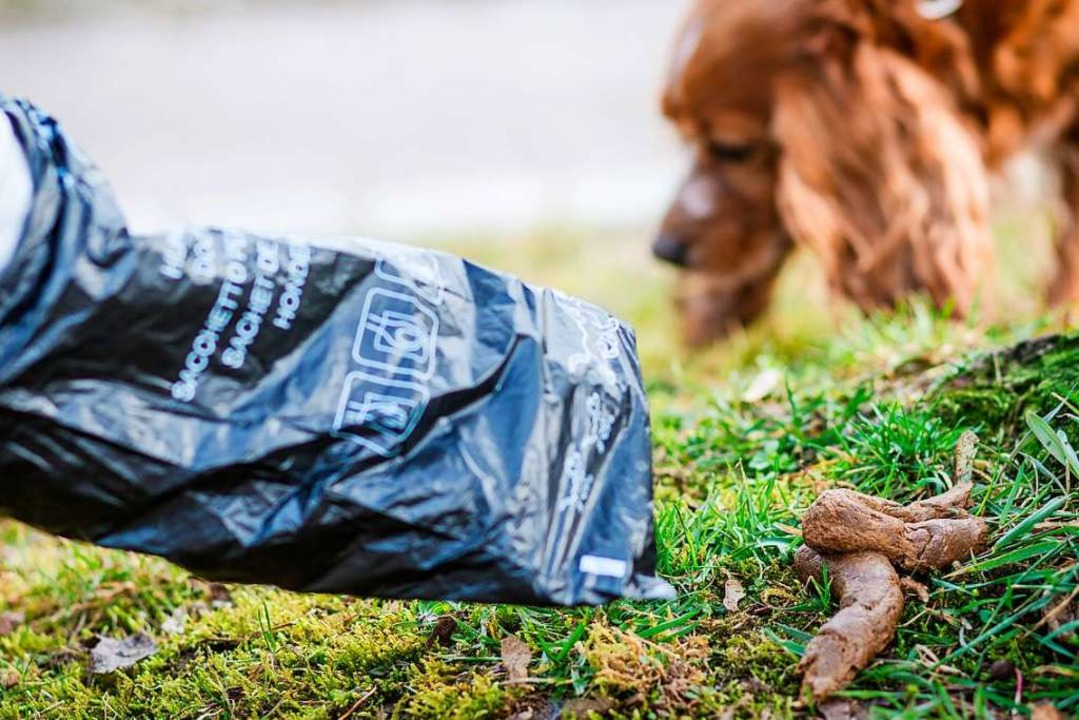 So ist es richtig: Wer mit seinem Hund...essen Hinterlassenschaften einsammeln.    Foto: Christoph Schmidt