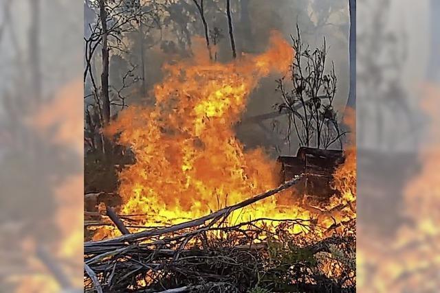 Extreme Buschfeuer werden öfter auftreten