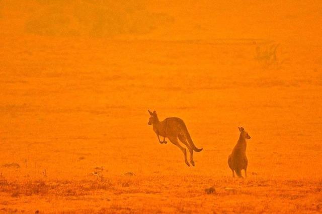 Verheerende Buschbrände haben katastrophale Folgen für Australiens Tier- und Pflanzenwelt