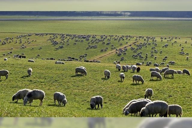 Scheuerebene als Schafebene