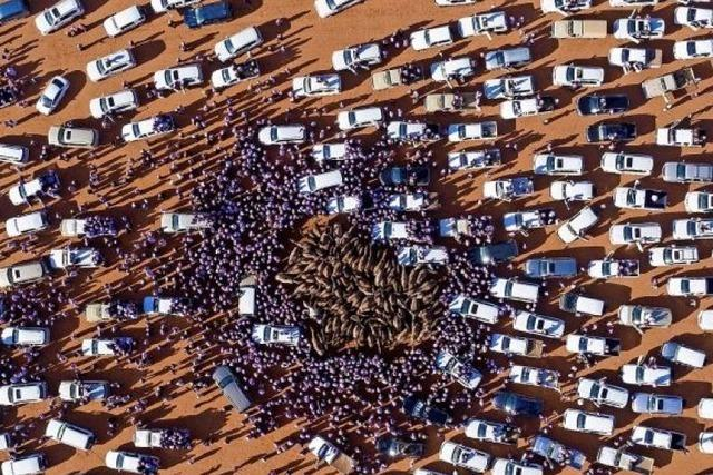 Kamelfestival in Saudi-Arabien