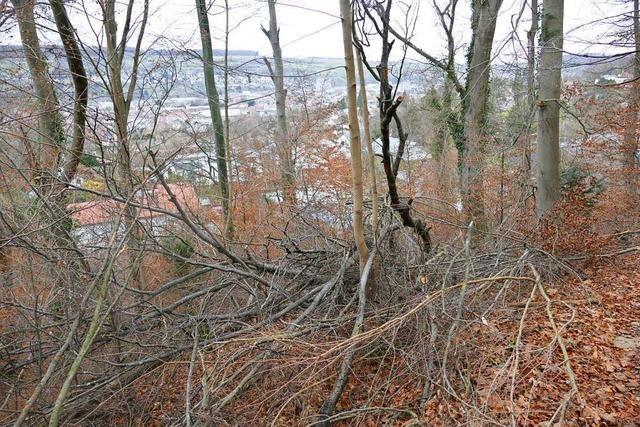 Die Baumfällungen am Schädelberg verzögern sich