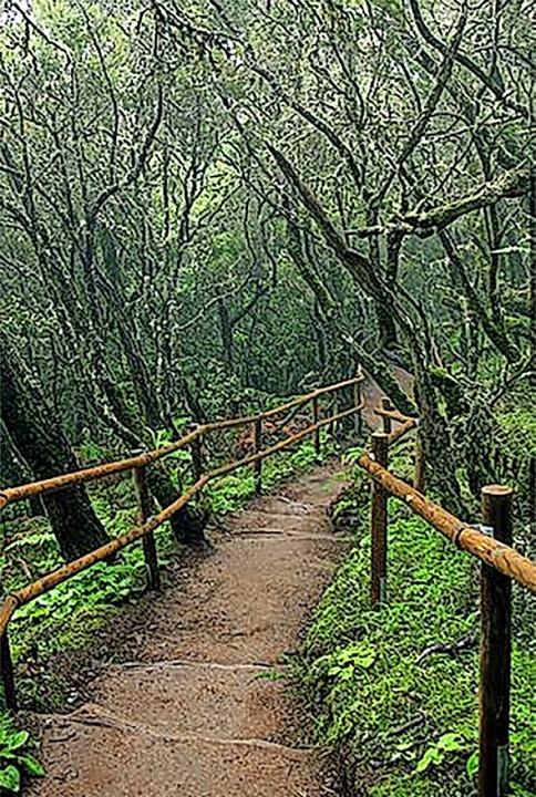 Einsam: Der Mercedeswald auf  Teneriffa  | Foto: spain info