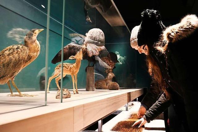 Die Basler Museumsnacht feiert kommenden Freitag ihr Jubiläum