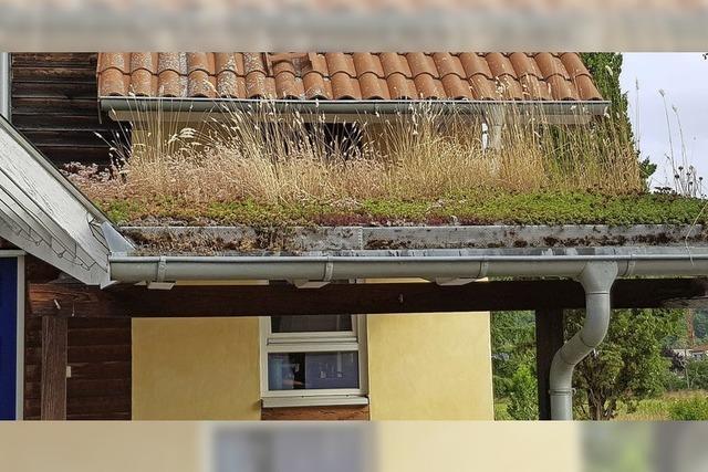 Kommt bald die Solardach-Pflicht?
