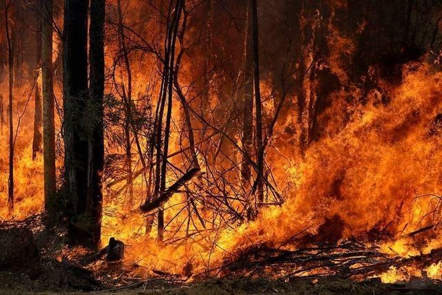 Buschfeuer in Australien vereinen sich zu