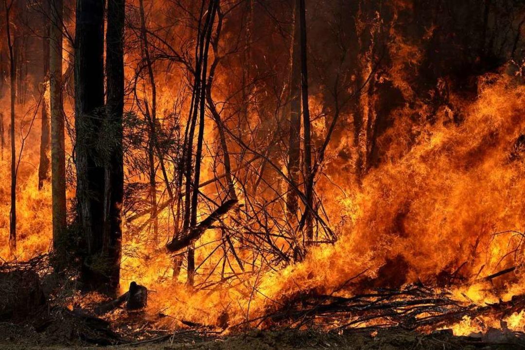 Ein Buschfeuer, welches gelegt wurde u...brennt im Bundesstaat New South Wales.  | Foto: Rick Rycroft (dpa)
