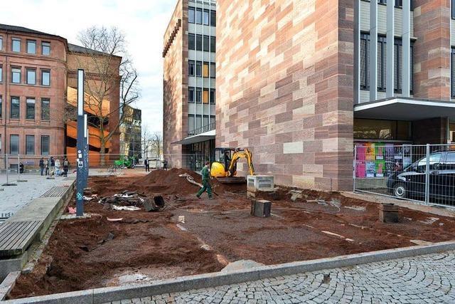 Eine Platane musste für die Sanierung des KG II der Universität Freiburg weichen