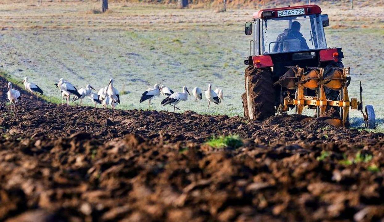 Während ein Landwirt mit seinem Trakto...rche im gefrorenen Boden nach Nahrung.  | Foto: Thomas Warnack (dpa)