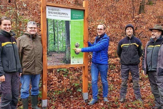 Biotopbäume und Waldrefugien für mehr Biodiversität