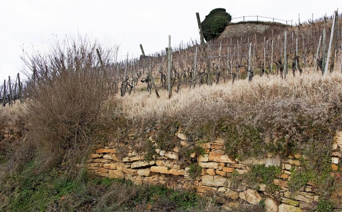 Eine von zwei Trockenmauern, die am Innerberg  saniert werden soll.  | Foto: Volker Münch