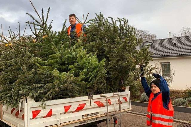 Jugendfeuerwehr holt circa 1000 Weihnachtsbäume in Grenzach-Wyhlen ab