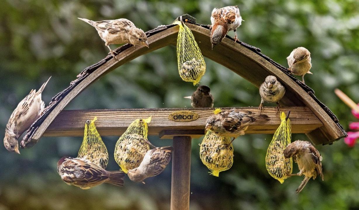 Mahlzeit: Viele Spatzen sammeln sich an dieser Futterstelle.  | Foto: Ulrich Wendelstorf