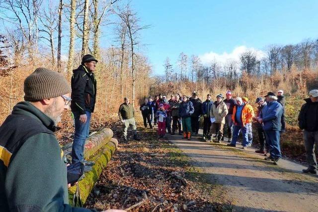 Im Markgräflerland sinkt das Interesse an Holzversteigerungen