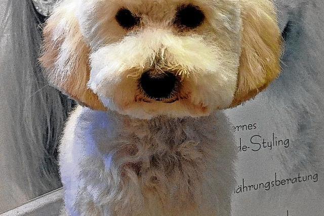 Hundesteuer bleibt bei 200 Euro