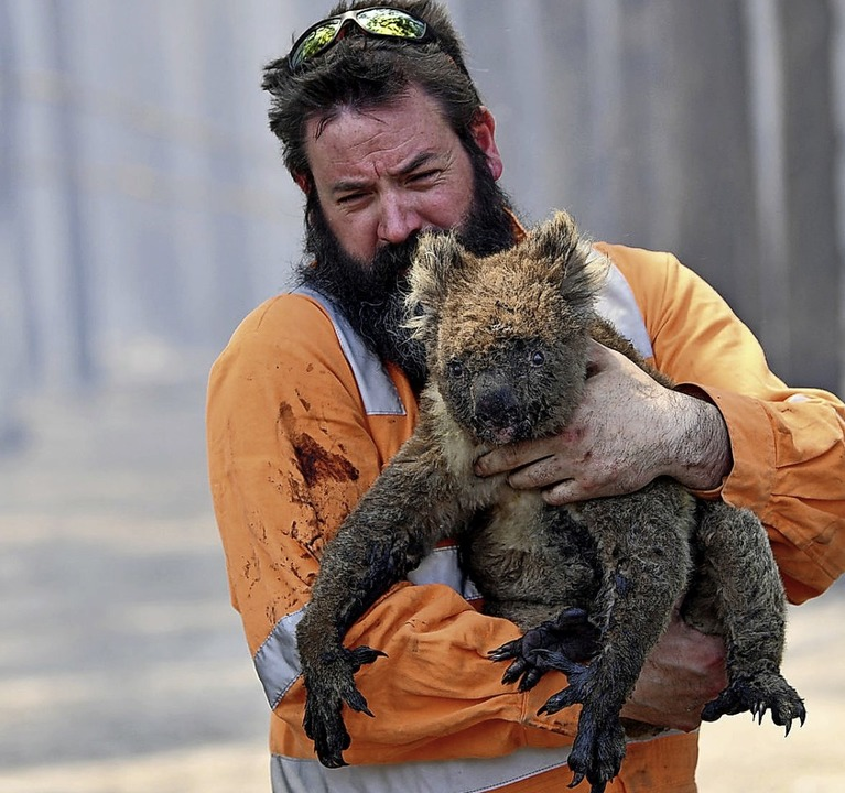 Bilder, die um die Welt gehen: Ein Wil...einen Koala aus einem brennenden Wald.  | Foto: David Mariuz (dpa)