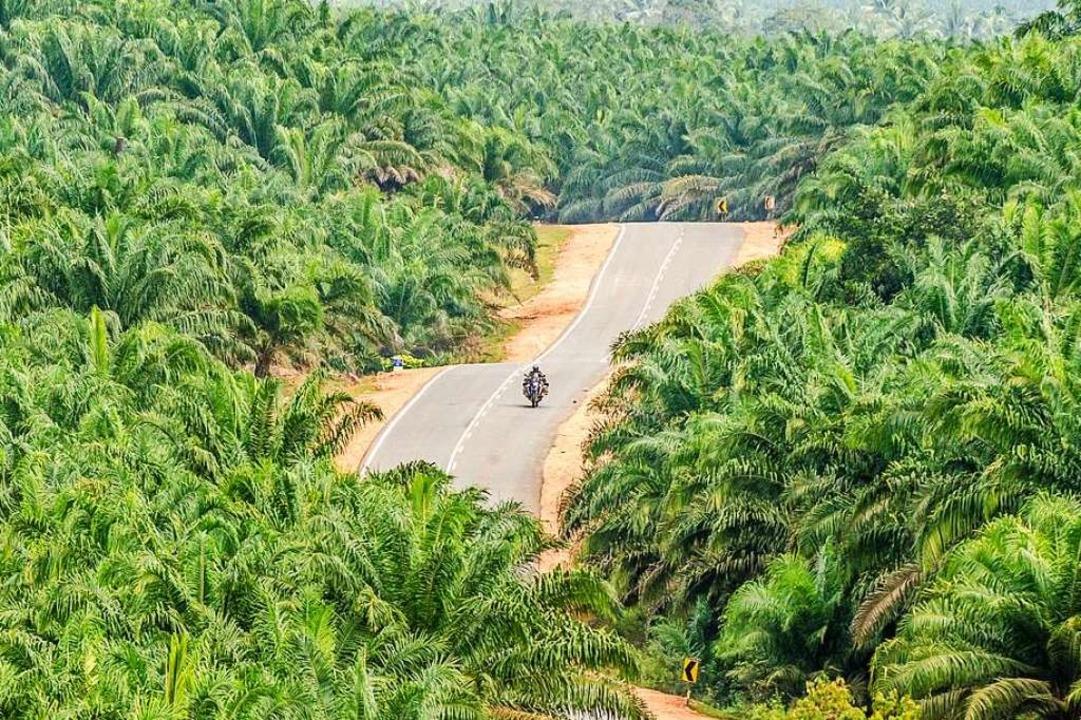 So unterschiedlich kann die Vegetation... durch Ölpalmenplantagen in Malaysia    | Foto: Rolf Lange