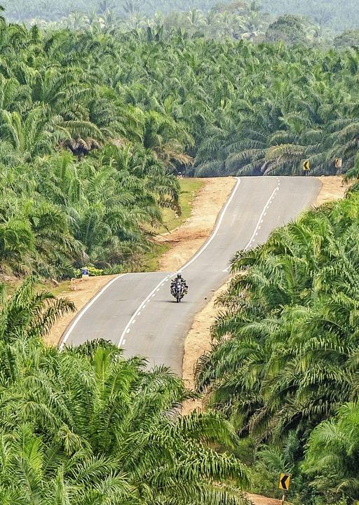 Rolf Lange fährt mit seinem Motorrad durch Ölpalmenplantagen in Malaysia.  | Foto: Rolf Lange