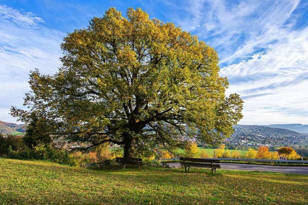Solche Bäume sind ein riesiger Schatz,... kleine Baum ist hilfreich fürs Klima.  | Foto: Franz Wieber