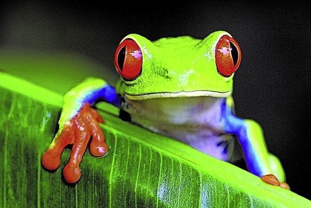 Tobias Hauser zeigt Costa Rica