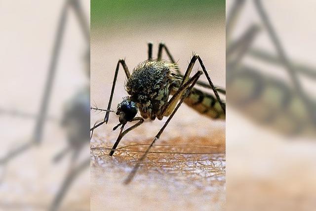 Kritik an Stechmückenbekämpfung