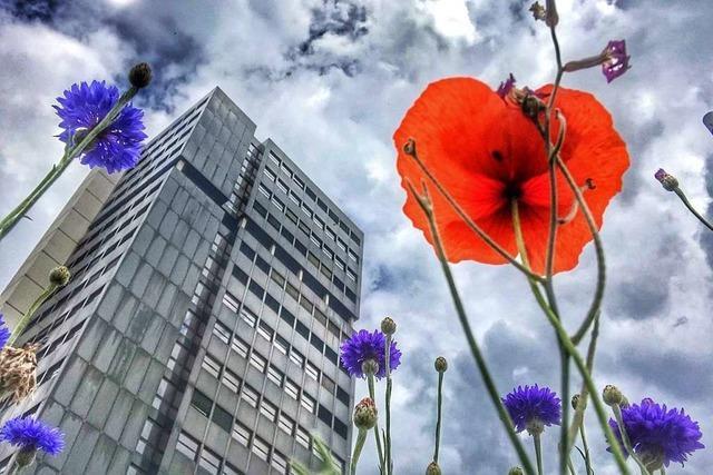 Wird das Lörracher Rathaus saniert oder abgerissen?