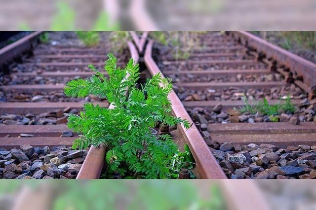 Besserer Bahnverkehr für Wehr