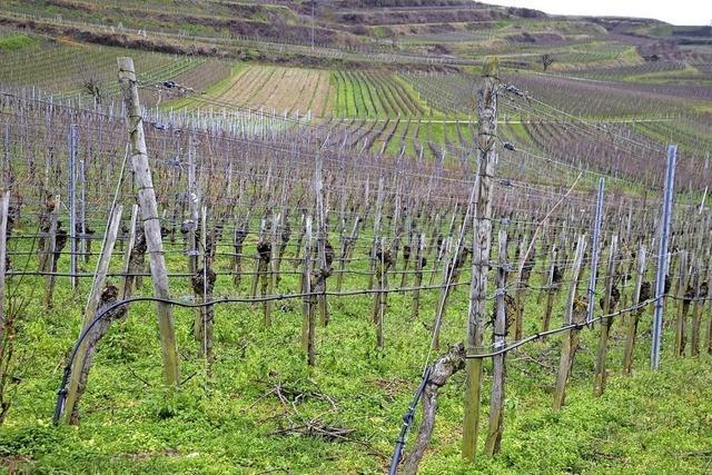 22 Hektar hängen am Tropf