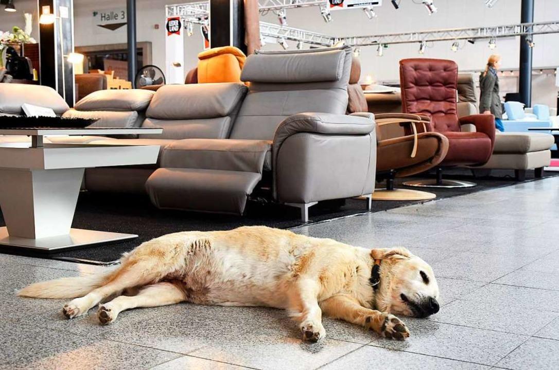 Symbolbild von der Badenmesse 2018: Da...nn dieser Hund im Bild zum Glück lebt.  | Foto: Thomas Kunz