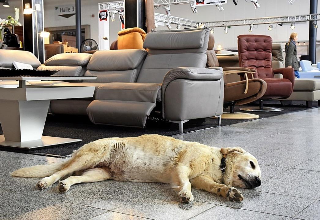 Symbolbild von der Badenmesse 2018: Da...n dieser Hund im Bild zum Glück lebt.   | Foto: Thomas Kunz