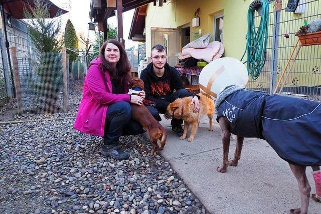 Problemhunde machen dem Tierheim in Weil am Rhein immer mehr zu schaffen