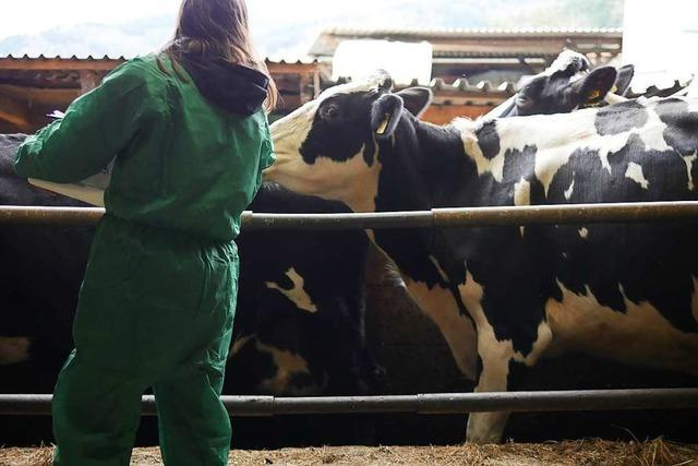 Landratsamt: Tod von Vieh in Wittnau keine Folge der Zwangsimpfung
