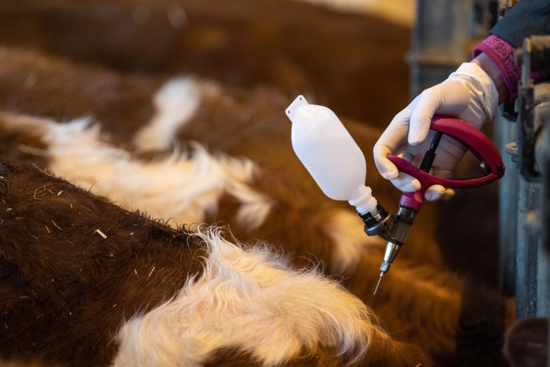 Impfaktion gegen Blauzungenkrankheit  | Foto: Fabian Sommer (dpa)