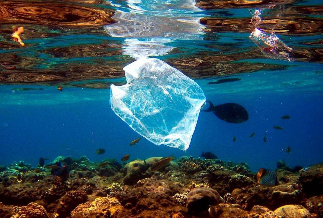 Plastiktüte im Roten Meer  | Foto: Mike_Nelson