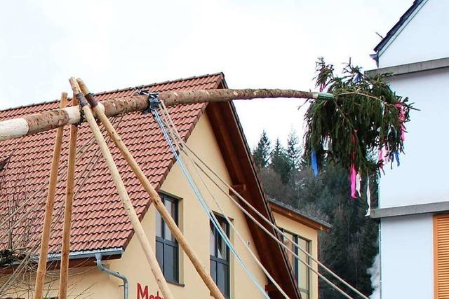 Der Narrenbaum ragt in Schönau 27 Meter in die Höhe