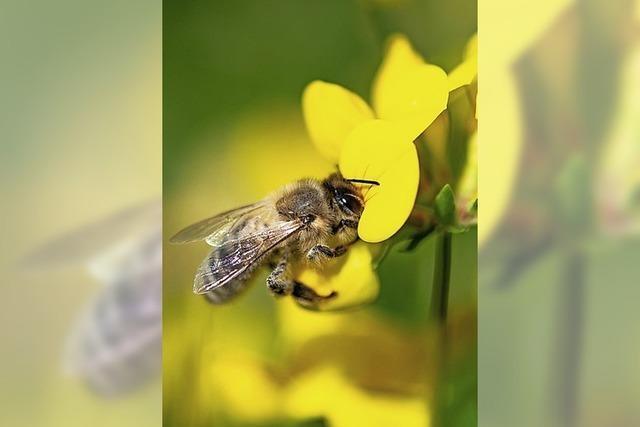 Pro und Contra Bienen-Volksbegehren