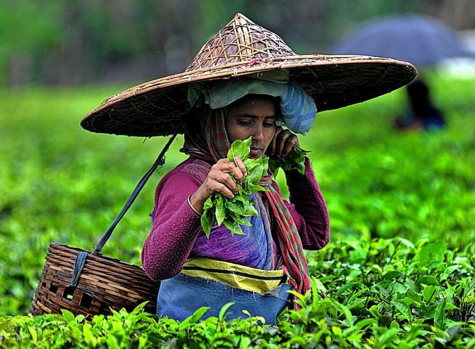 Eine Teepflückerin im indischen Assam    Foto: ---