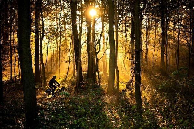 Wie der Mensch den Wald durch seine Nutzung geprägt hat